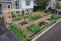 Garden/Vegetables / Growing and care of the vegetable garden with added tips and techniques--some tried and true and some to be explored and evaluated. / by Phyllis Ralstin