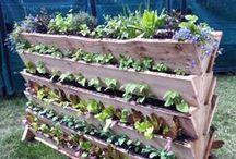 ideas for mom's garden / by Michelle Sutton