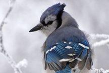 ART - Photography (Birds)