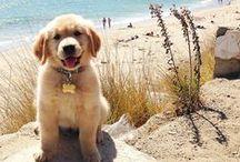 Puppies! / by Megan Peerman