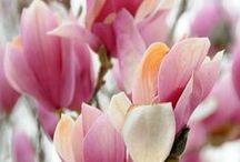 DESIGN - Floral