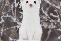 かわいい動物(animals)(*'▽'*)♡