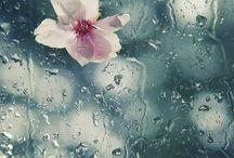 rain ~