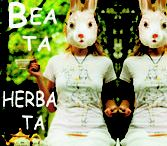Bea Herba / dylematy herbaty