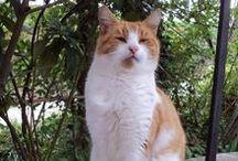 GATTI - All cats