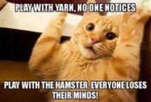 >'.'< Kat's Cats =^.^= / by ✌ Kathleen S. Cruikshank ✌