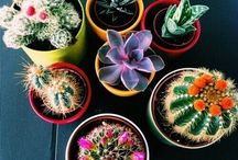 Indoor Plants / Indoor plant varieties and care tips. Cute DIY planters and pots.