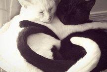 Chat / Les plus beaux animaux de compagnies!