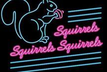 • Squirrels • / I love squirrels!