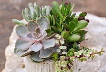 Gardening & Houseplants / Garden & Landscaping ideas / by Steph @ Silver Boxes