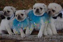Cute Bebes / Doggies / by Allison Burke