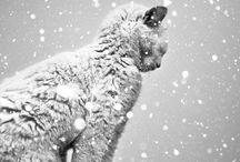 • Season✧ Winter •