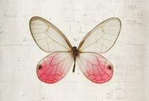 Illustration > butterflies