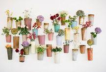 Home > garden