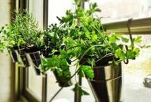 Mi Casa: Planting Seeds / by Katie Murch
