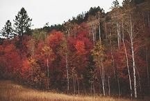 Autumn / by Kristine Roy