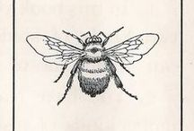 Bzzzzzz / Our relationship with and to bees is crucial and essential.