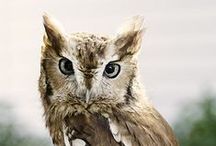 Owls / by Kristine Roy