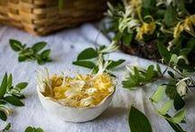 Fresh Honeysuckle / Fresh Honeysuckle Eau de Parfum is a fresh, luscious floral that captures the enchanting spirit of the honeysuckle housed in an artisanal glass bottle. / by Fresh