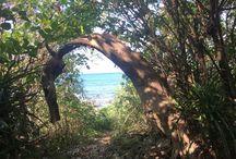 ビーチ(Beach ) / Siestaから海につながる道を抜けるとビーチに出られます