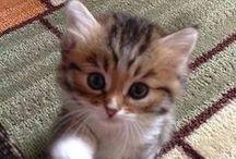 Güzel kedidikler