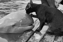 Animals :3 / by Haley Ellingson