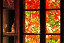 Autumn, Halloween & Thanksgiving. / by Stephanie Aleck Cole