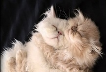 Just Cats :-D / by Diane L.