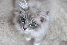 .cats / cute