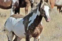 Animals - Mammals: Horses, Mustangs & Ponies / #horses
