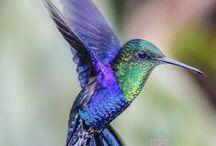 Animals - Birds: Hummingbirds / #hummingbird