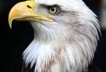 Animals - Birds: Eagles & Co. / #birds of prey