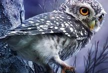 Animals - Birds: Owls & Co. / #owl