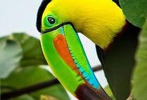 Animals - Birds: Toucans & Hornbills / #toucan