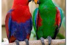 Animals - Birds: Parrots, Budgies & Co. / #parrot