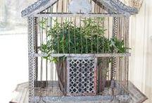 Interiors - Birdcages & Aviary Ideas / #birdcage #aviary