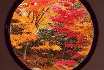 Outdoors - Japanese Gardens / #japanese_garden