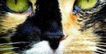 Animals - Mammals: Cats & Felines / #cats, #felines