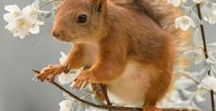 Animals - Mammals: Squirrels & Chipmunks / #squirrels #chipmunks