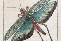 Animals - Insects: Mantids, Locusts & Co. / #mantis #locust #grasshopper #cricket #stickinsect