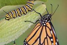 Animals - Insects: Butterflies, Moths & Caterpillars / #butterfly #moth #caterpillar #worm