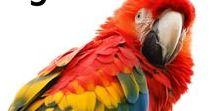 Parrots / Everything parrots! Crafts, art, parrot memes, parrot party ideas and parrot printables.
