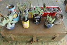Window Box & Plants