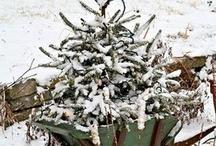 Christmas- Naturally