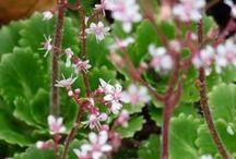 Bodembedekkers / Bodembedekkers zijn lage, breed uitgroeiende vaste planten, die ervoor zorgen dat onkruid minder kans krijgt om te groeien, wat uw tuin ook meteen een stukje onderhoudsvriendelijker maakt!