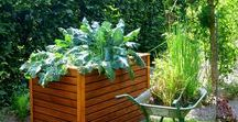 HS Gardening / How to grow your own food.