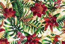 TropicalFlowers