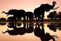 Elephants / by Ziz Q-d