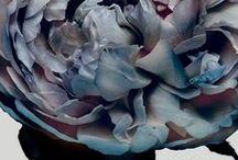 FLORALS | Walter G Textiles