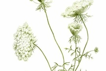 botanical and scientific illustrations / Vintage botanical illustrations, zoological illustrations, plant sketches, flower prints, schematics, astronomy, etc..